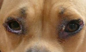 L'inflammation des yeux